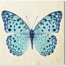 Leinwandbild Blauer Schmetterling