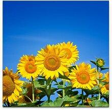 LeinwandbildBlühende Sonnenblumen