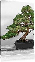 Leinwandbild Bonsai Baum auf Holztisch East Urban