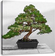 LeinwandbildBonsai Baum auf Holztisch East Urban