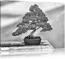 Leinwandbild Bonsai Baum in Monochrom East Urban