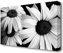 Leinwandbild Daisy Petal Beauty B n W Flowers East