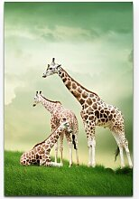 LeinwandbildDrei relaxende Giraffen