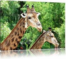 """Leinwandbild """"Giraffen"""", Fotodruck Pixxprint"""