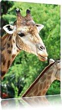 Leinwandbild Giraffen, Fotodruck Pixxprint