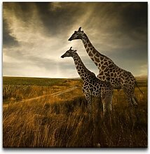 Leinwandbild Giraffen im Sonnenuntergang
