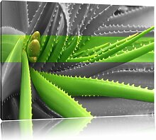 Leinwandbild Grüne Aloe Vera Pflanze East Urban