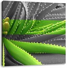 LeinwandbildGrüne Aloe Vera Pflanze East Urban