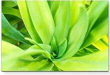 Leinwandbild Grüne Pflanze – Nahaufnahme