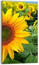 Leinwandbild Hunderte von Sonnenblumen