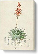Leinwandbild Illustration einer Aloe Vera-Pflanze