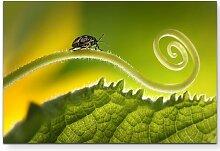 Leinwandbild Käfer auf einer Pflanze