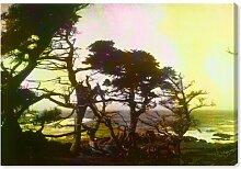 Leinwandbild Kalifornische Zypresse 1 East Urban