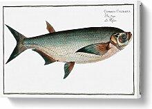 Leinwandbild Messer-Karpfenfisch Küstenhaus