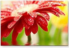 LeinwandbildPflanze im Wasser