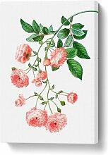 Leinwandbild Rambler Rose von Pierre-Joseph Redoute
