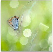 LeinwandbildSchmetterling mit Frühlingswiese