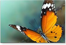 Leinwandbild Schmetterling – Nahaufnahme