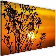 Leinwandbild Sonnenuntergang hinter einer Pflanze