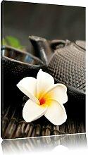 Leinwandbild Teekanne mit Kräutern, Fotodruck