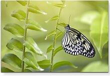 Leinwandbild Weißer Schmetterling