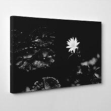 Leinwandbild White Water Lily Flower, Fotodruck