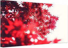 Leinwandbilder - Leinwandbild Ahornbaum im Herbst
