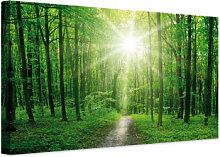 Leinwandbilder - Leinwandbild Sunny Forest 01
