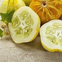 Lemon Gurke Samen - Gurken Platterbse