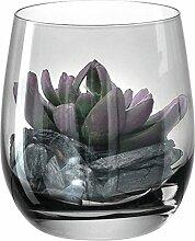 Leonardo - Glas, Dekoglas - mit Sukkulente -
