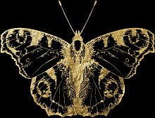 Leonique Acrylglasbild Nachtfalter 50x50 cm,
