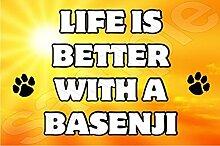 Life is better with a Basenji Hund–Jumbo
