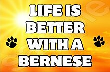 Life is better with a Berner Hund–Jumbo Magnet als Geschenk/Geschenk