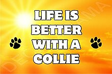 Life is better with a Collie Hund–Jumbo