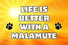 Life is better with a Malamute Hund–Jumbo