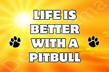 Life is better with a PITBULL Hund–Jumbo