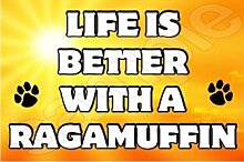 Life is better with a Ragamuffin–Jumbo