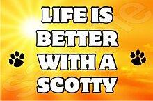 Life is better with a Scotty Hund–Jumbo Magnet als Geschenk/Geschenk
