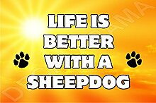 Life is better with a SHEEPDOG Hund–Jumbo