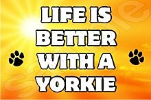 Life is better with a Yorkie Hund–Jumbo