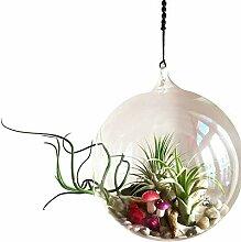 Linman Glas-Terrarien zum Aufhängen, von