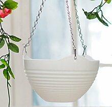 linyena Garten Innen Garten Pflanze-Blume Pflanze-Blume (weiß)