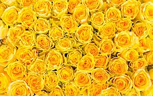 living walls Fototapete sonnige Rosen, 400 x 250