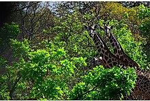 Livingwalls Fototapete Elefant Tiere Tansania 4.00