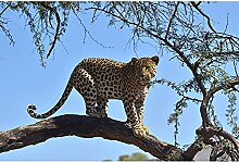 Livingwalls Fototapete Tiere Gelb | Blau Tansania