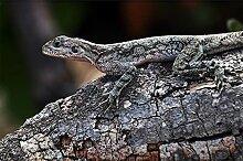 Livingwalls Fototapete Tiere Grau | Braun Tansania