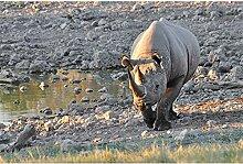 Livingwalls Fototapete Tiere Grau | Grün Tansania