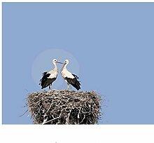 LIWEIXKY Rahmenlos Störche Im Nest Vögel Set Zum