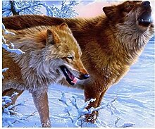 LIWEIXKY Rahmenlos Winter Wölfe Malen Nach Zahlen