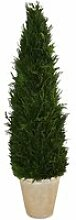 LOBERON Dekopflanze Zypresse Arras, grün (100cm)